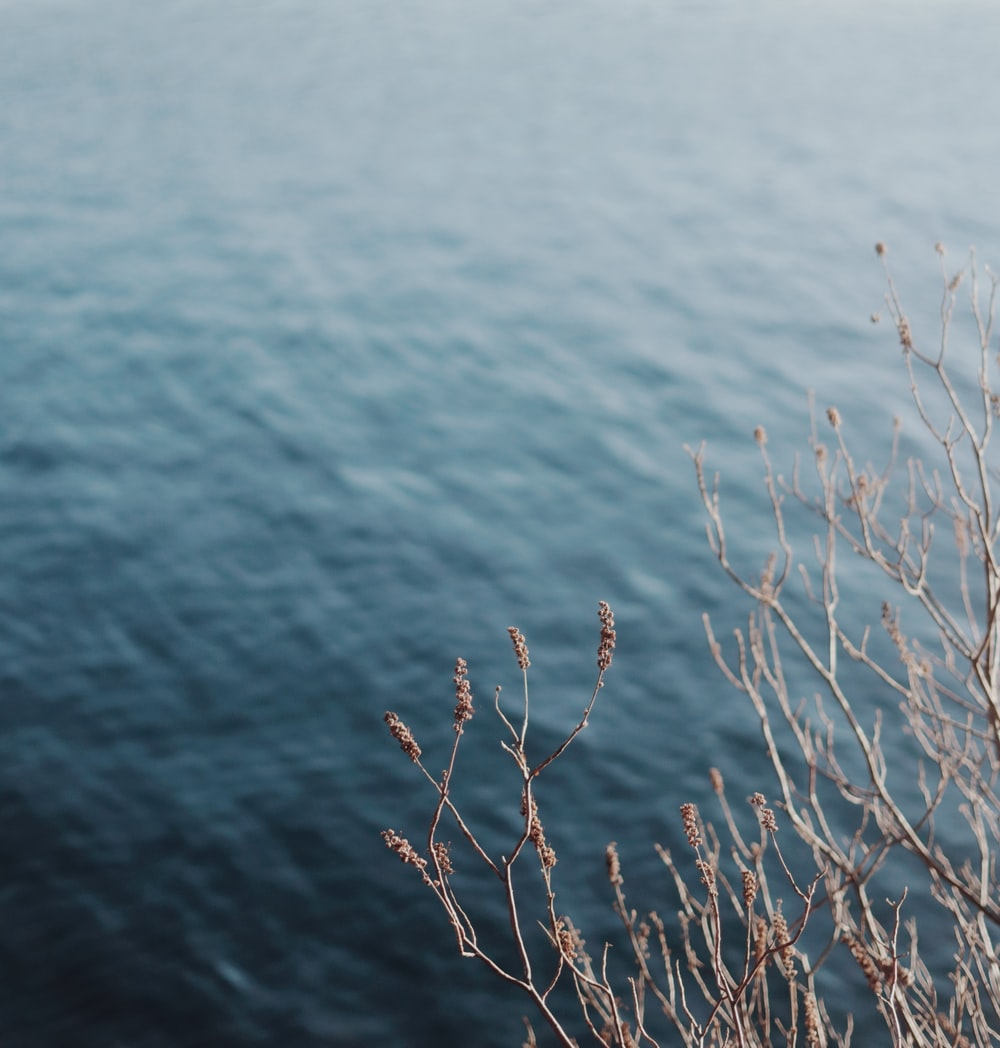 brown leafless tree on body of water during daytime