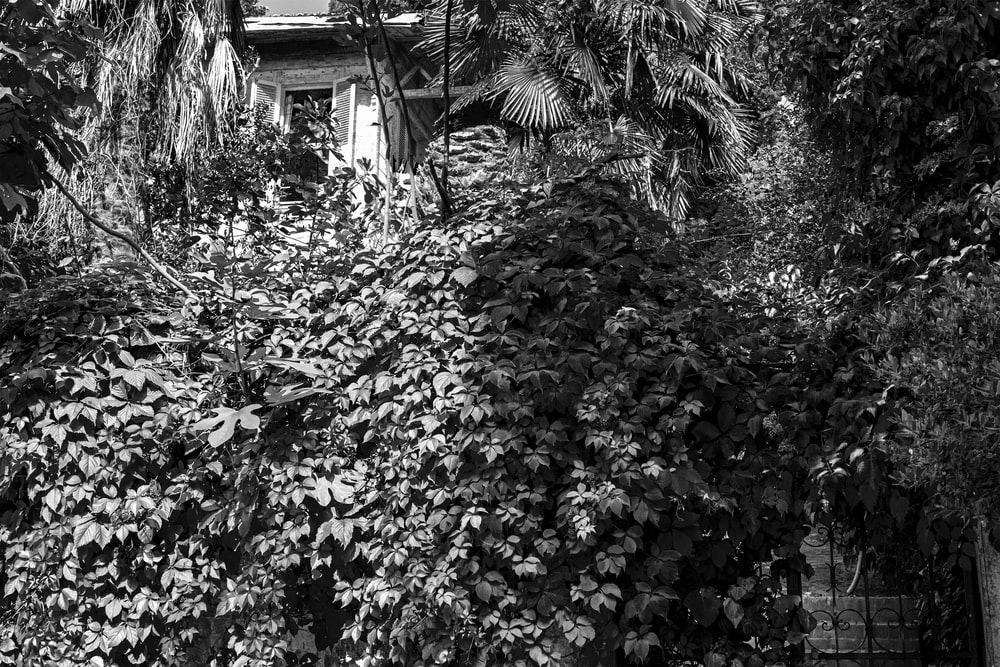 grayscale photo of trees and plants