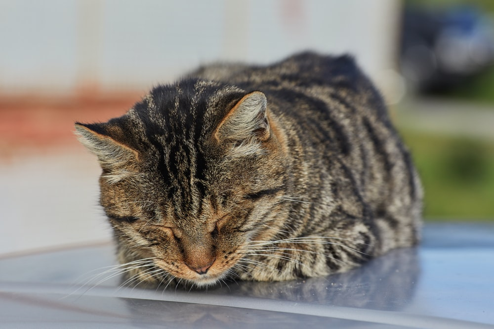 brown tabby cat lying on white table