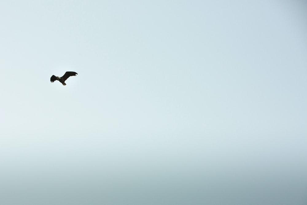 black bird flying under white sky during daytime