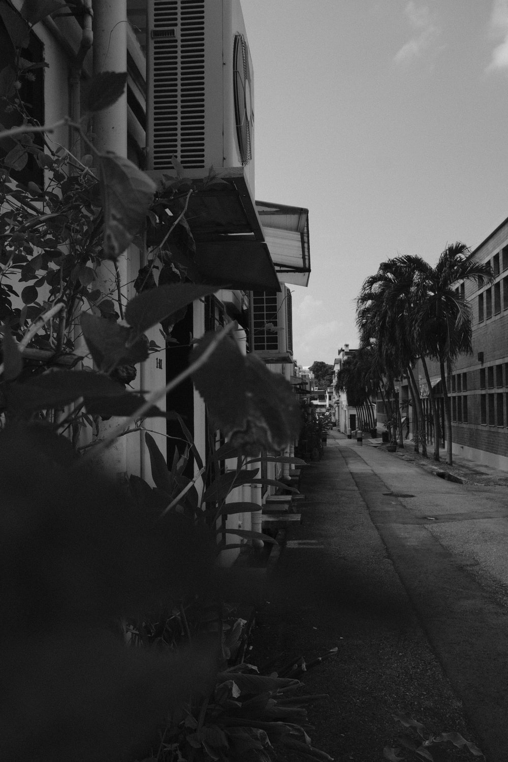 grayscale photo of palm trees near building