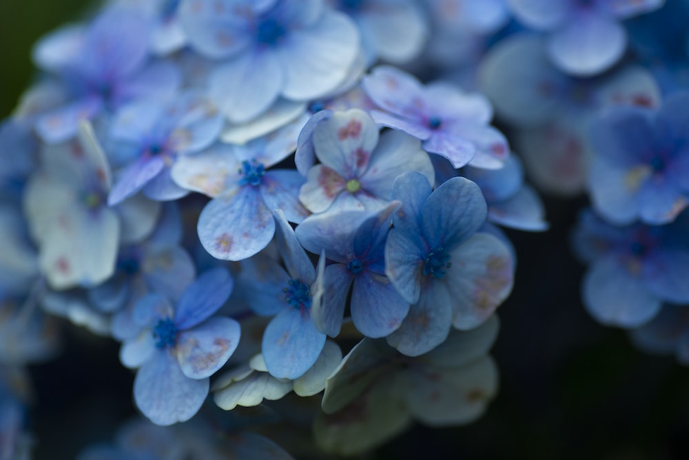 blue and white flower in close up photography
