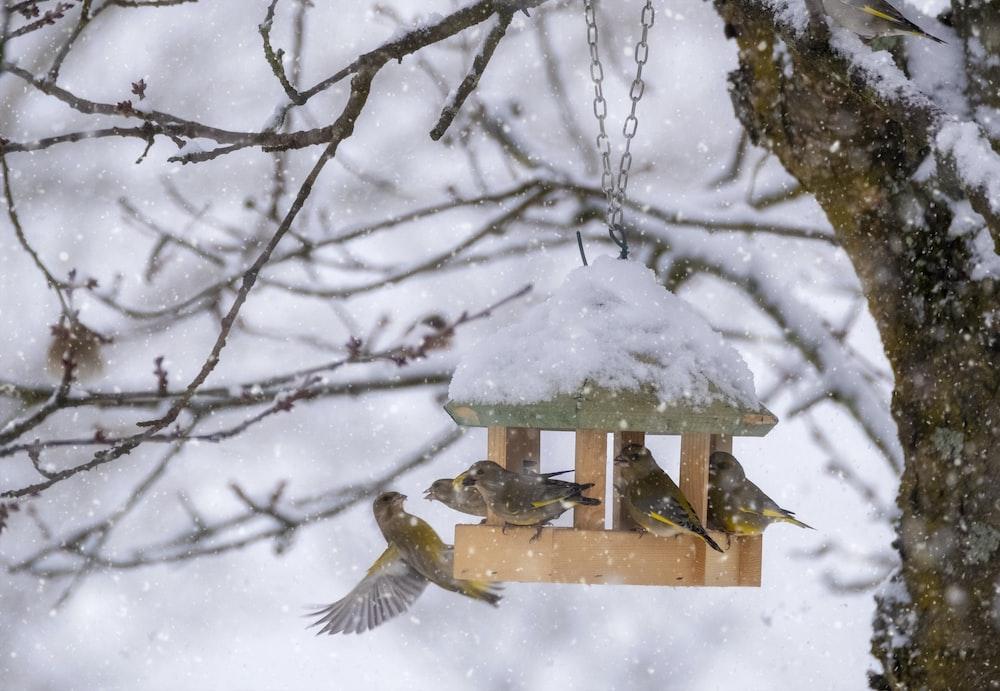 brown bird on brown wooden bird house