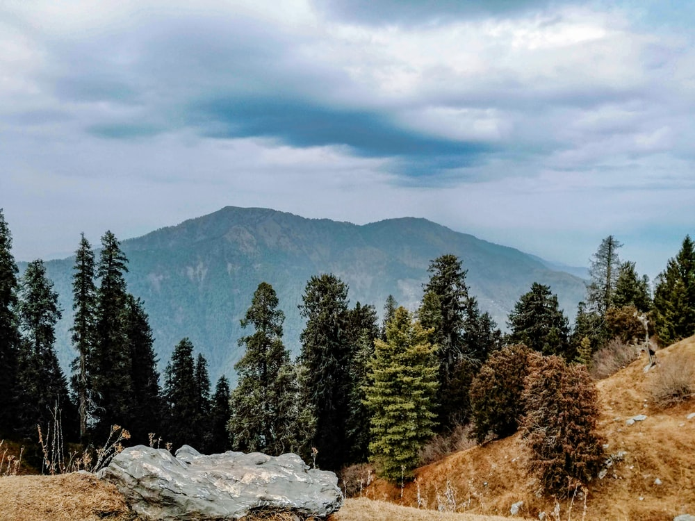 green pine trees on mountain under white clouds during daytime