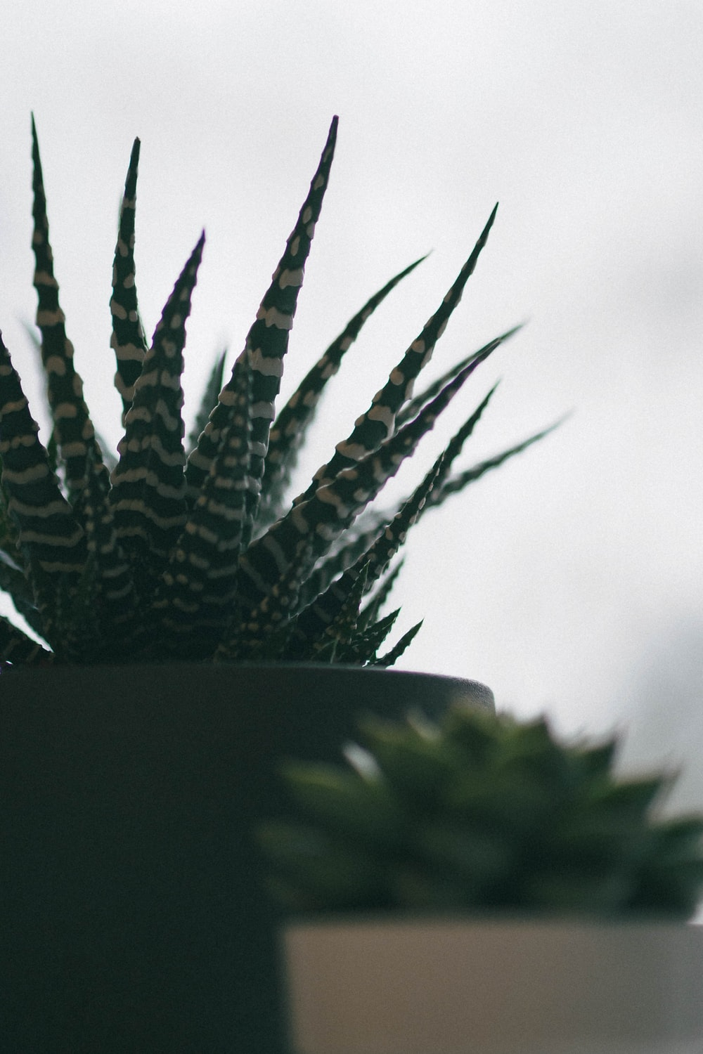 green and white plant in close up photography