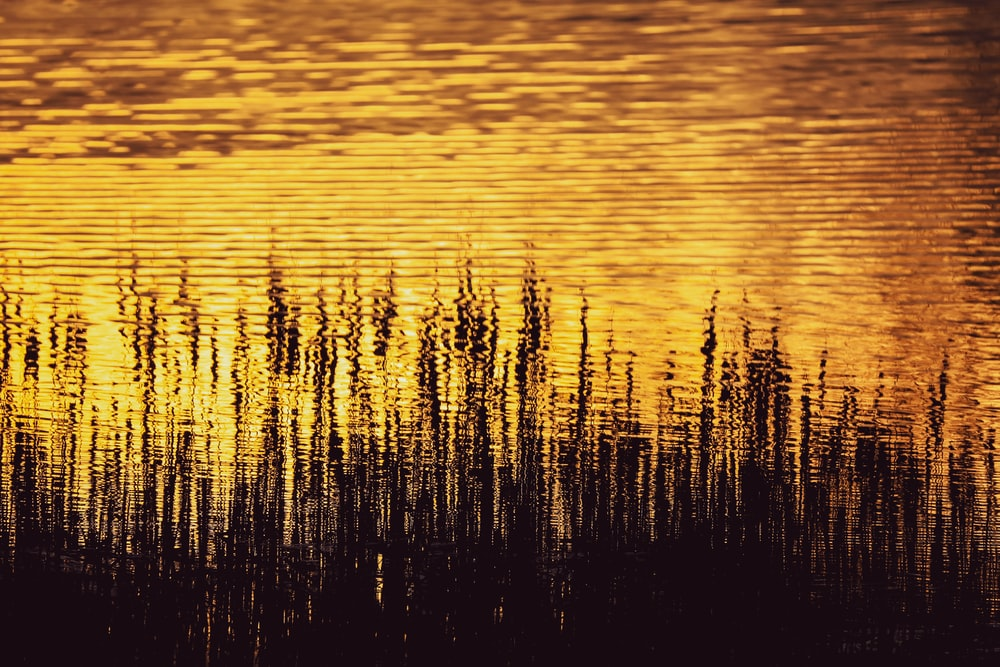 green grass on body of water during sunset