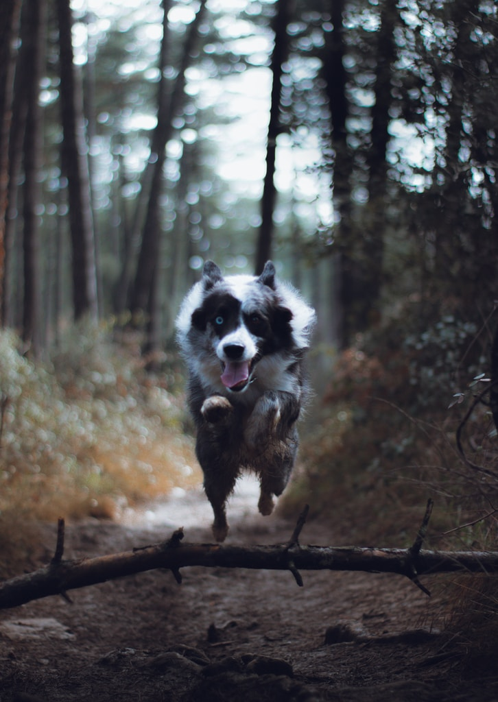 black and white border collie standing on brown tree trunk during daytime