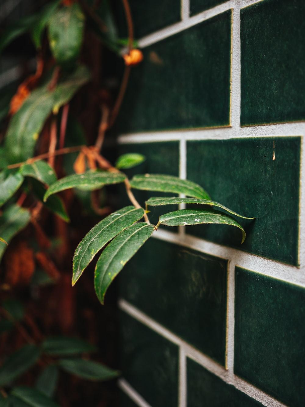 green leaves on black and white tile