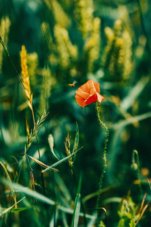 orange flower in green grass during daytime
