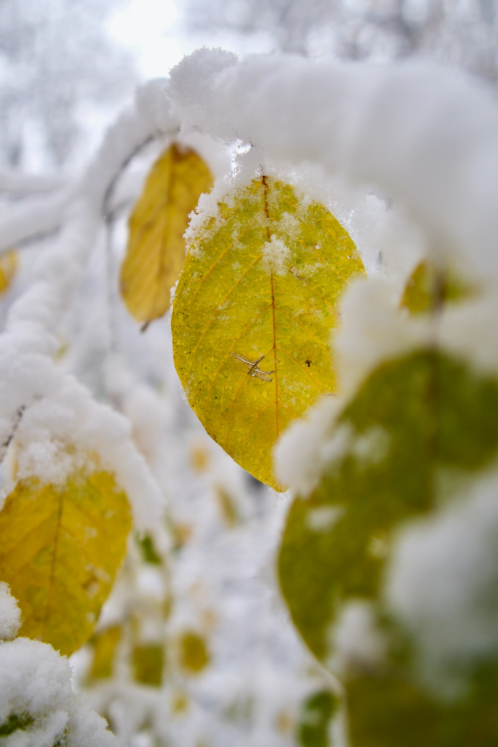 yellow leaf on snow covered ground