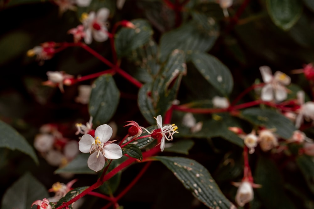 white and red flowers with green leaves