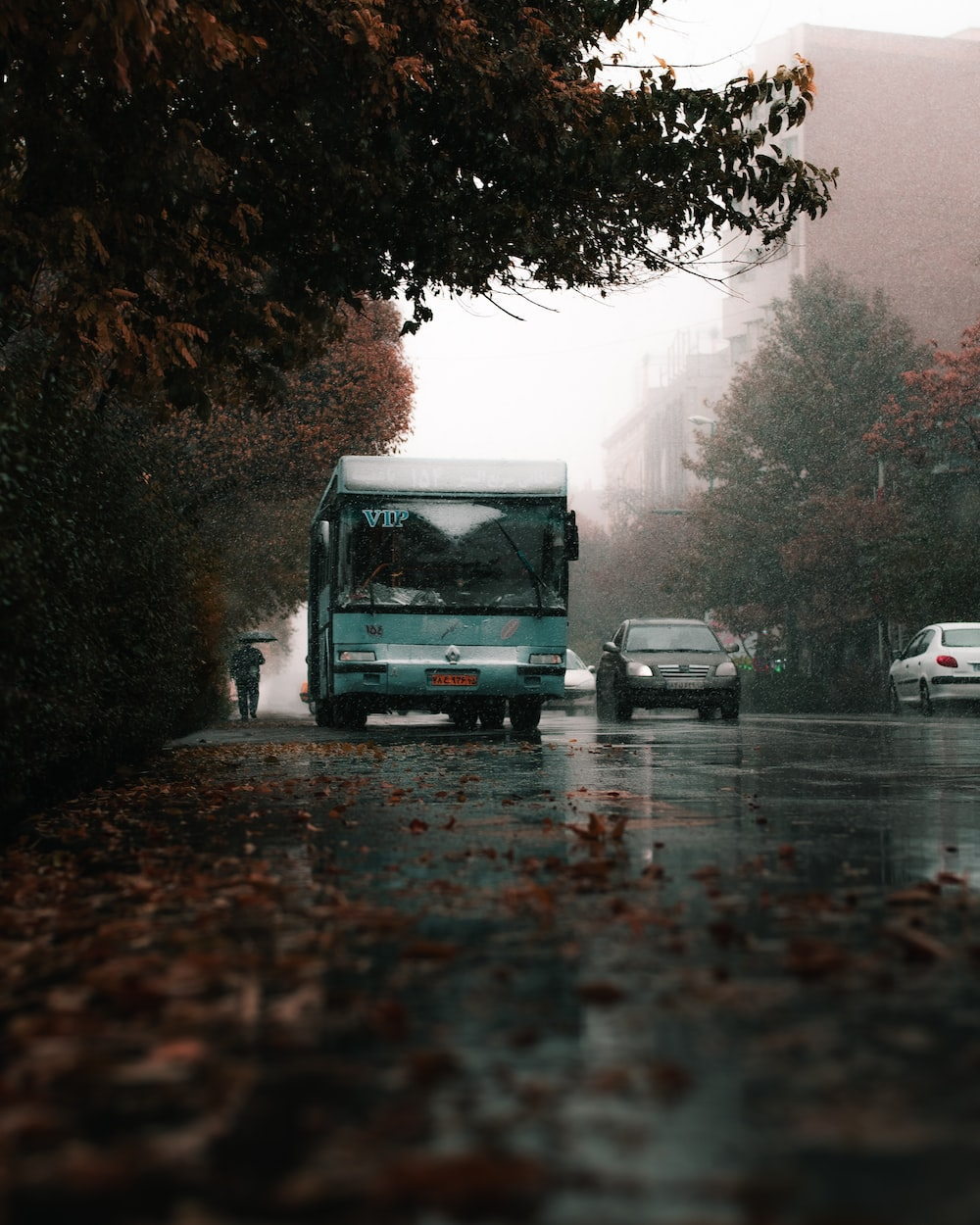 white and black bus on road during daytime