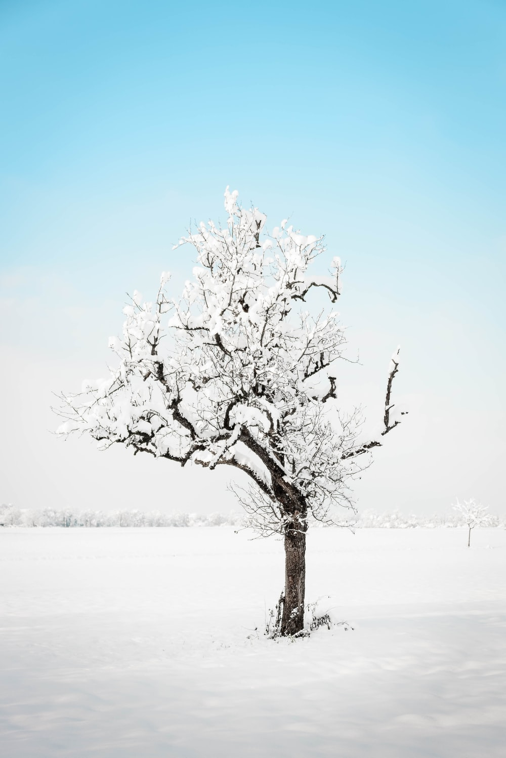 white tree on snow covered ground during daytime