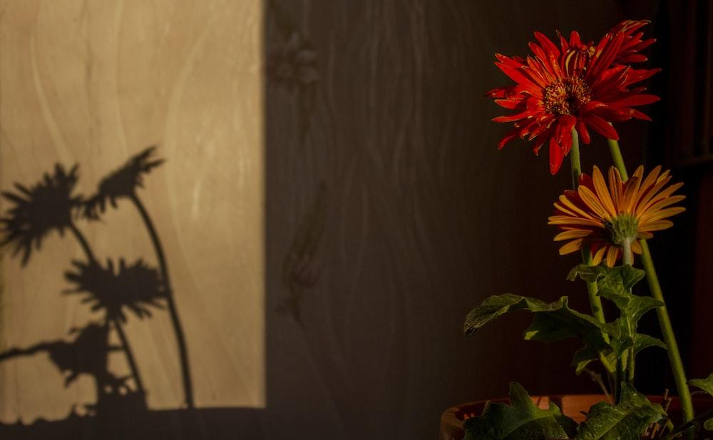 red flower in brown vase