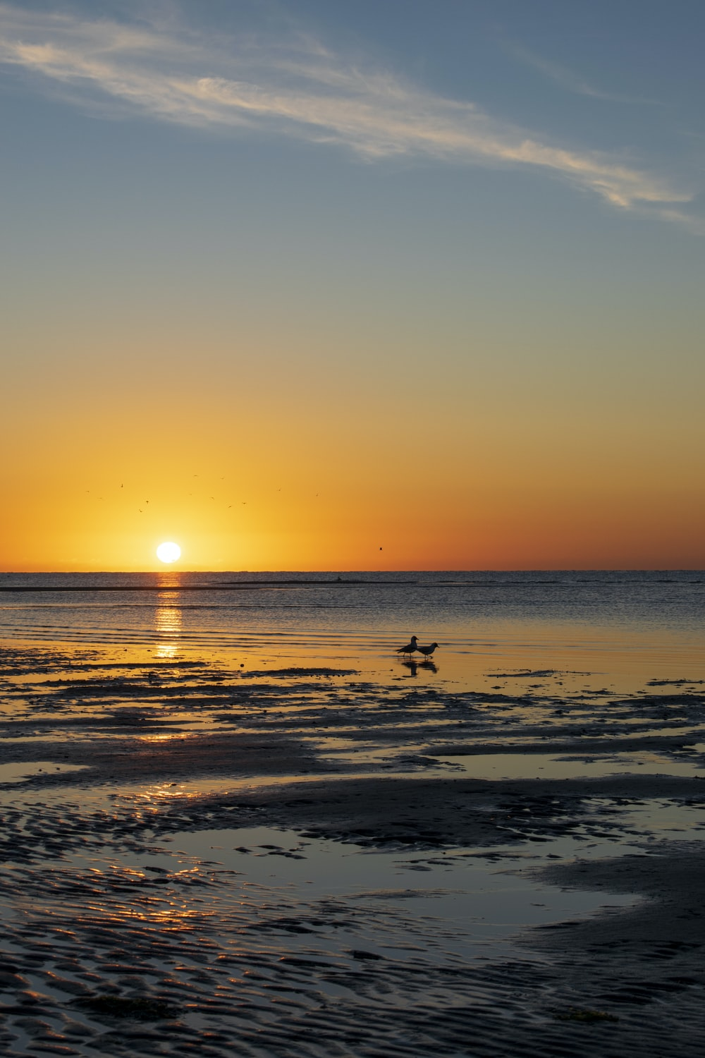 silhouette of birds on beach during sunset