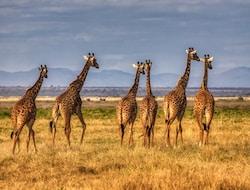 Unterwegs im Amboseli Nationalpark