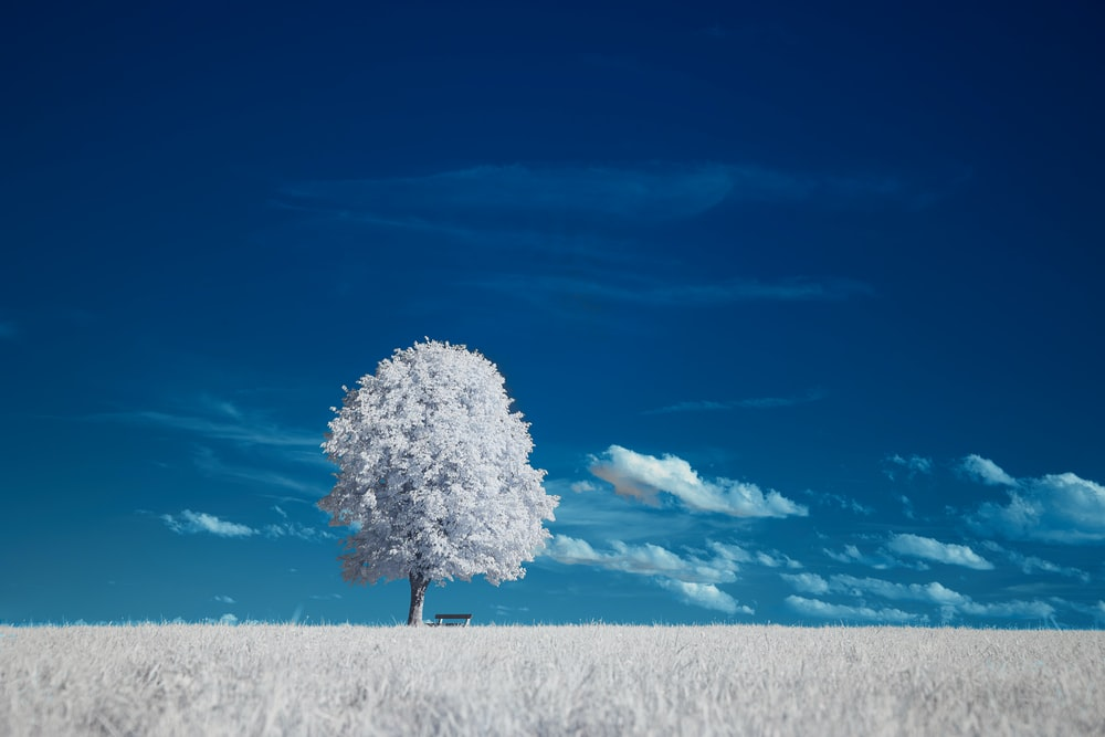 white tree on snow covered ground under blue sky during daytime