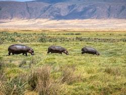 11 Lodgesafari, Fahrt zum Ngorongoro-Krater, Pirschfahrt - Fahrt zum Tarangire National Park