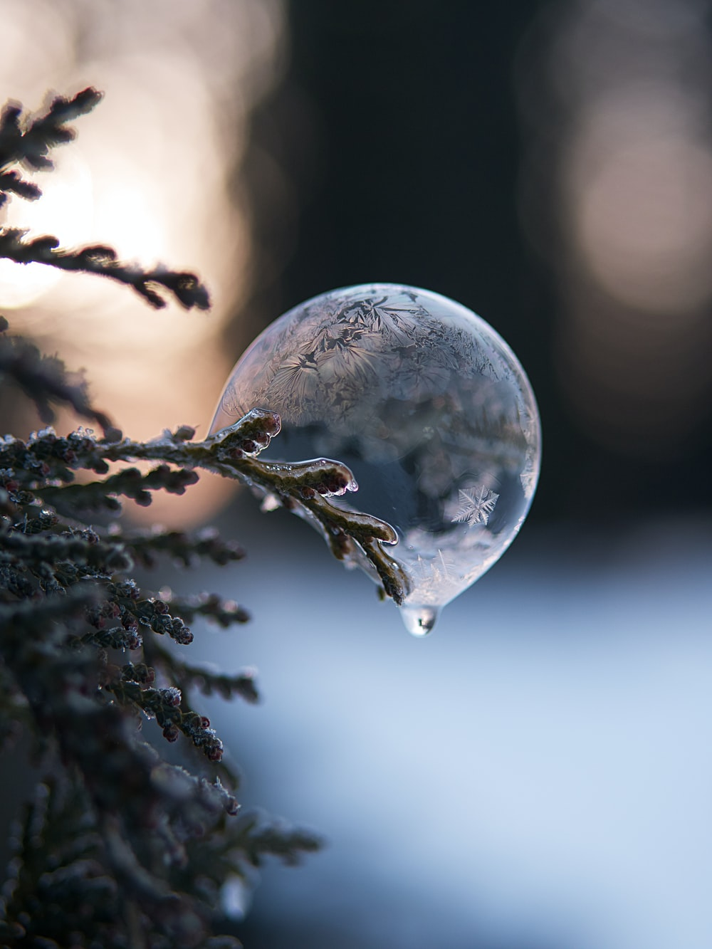 clear glass ball on green tree