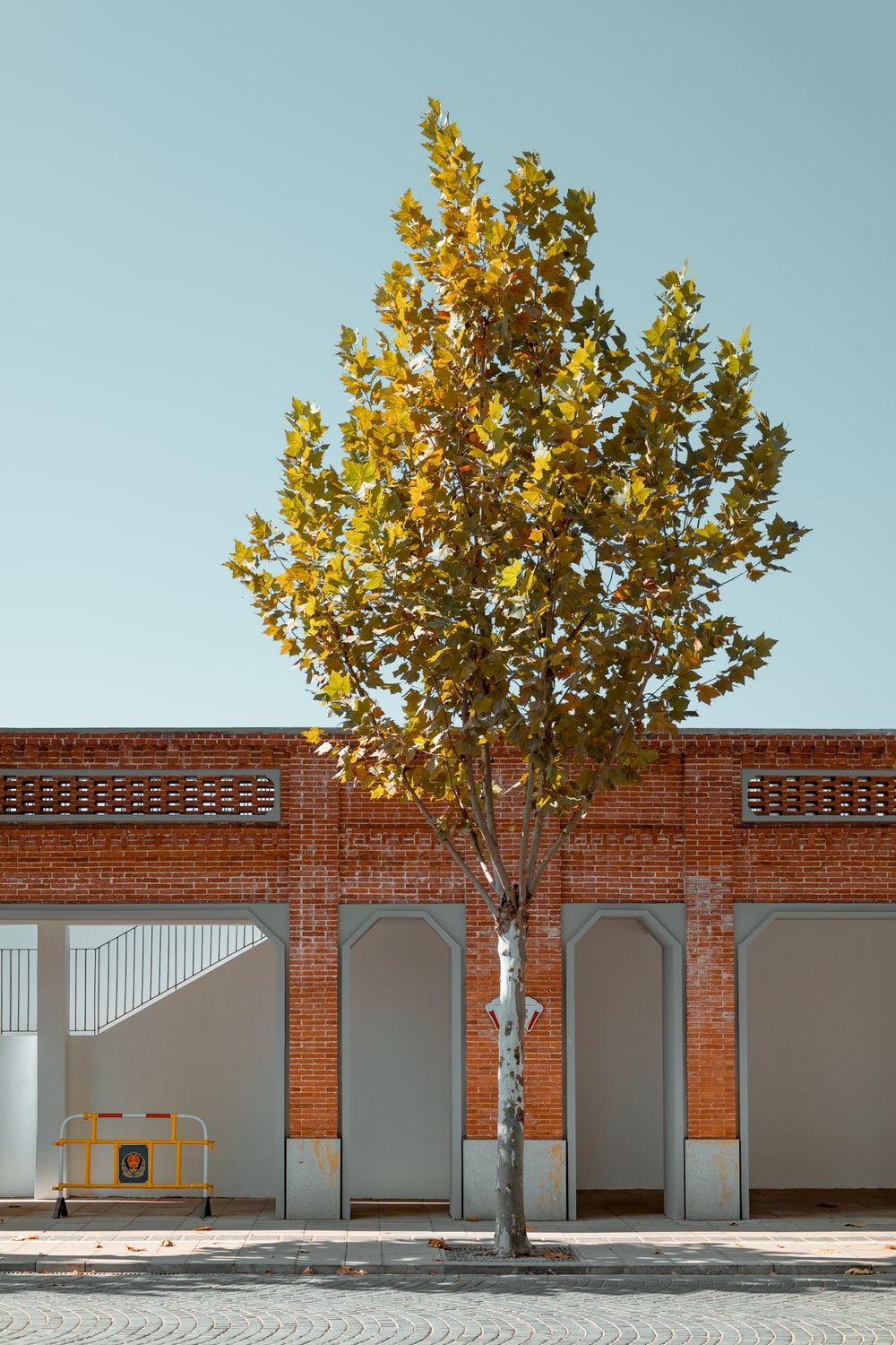 green tree in front of brown concrete building