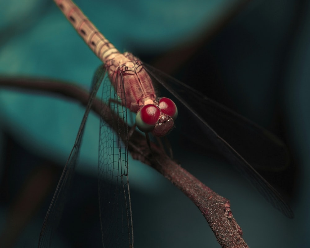 brown and black dragonfly perched on brown stem in close up photography during daytime