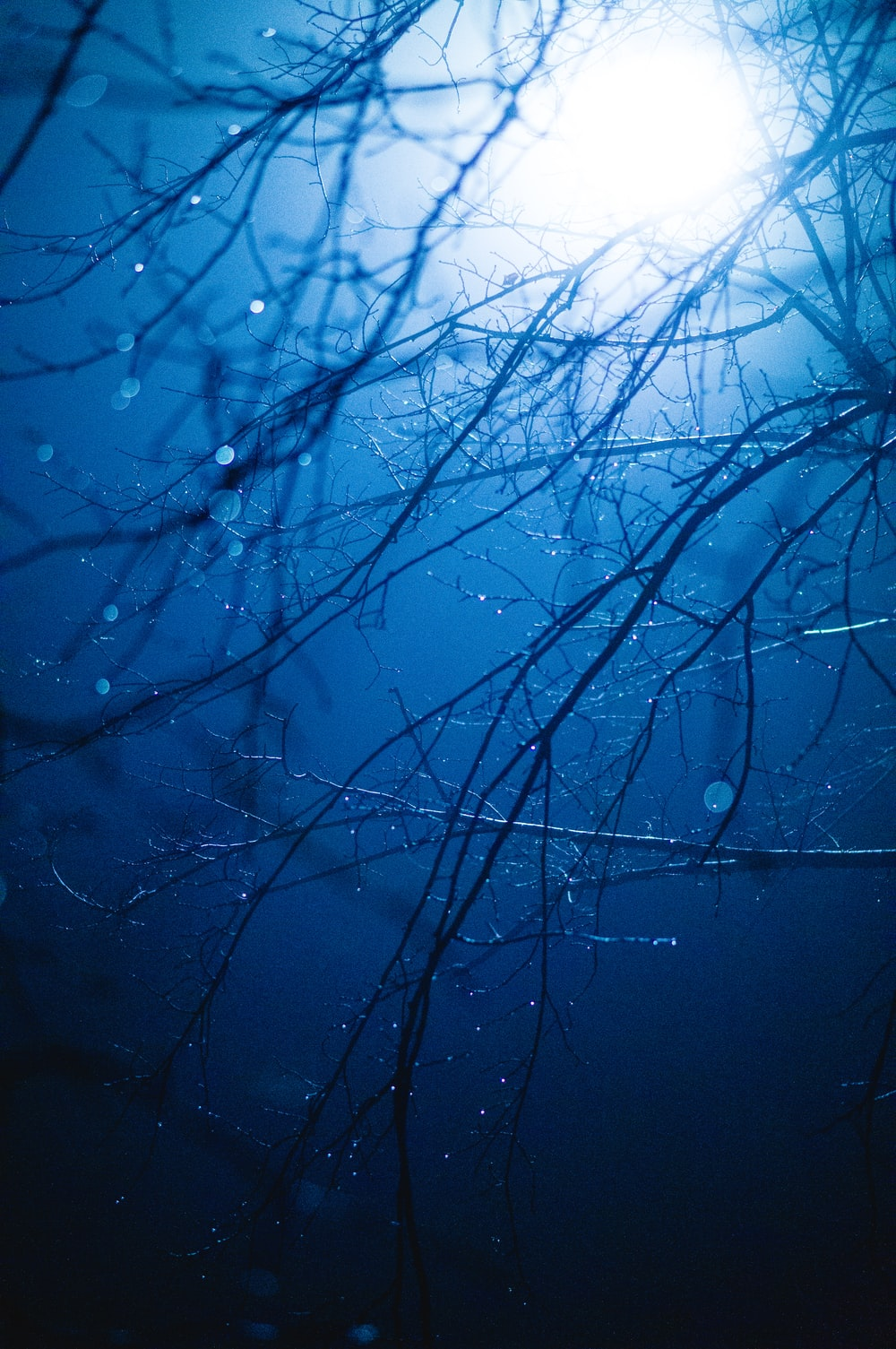 water droplets on bare tree