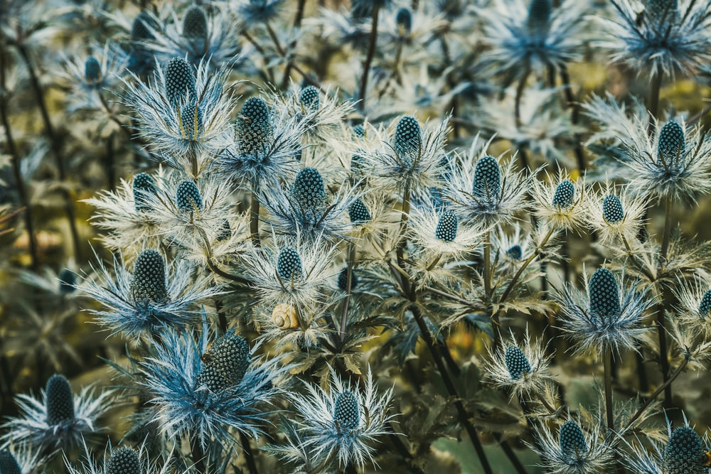 white and blue flowers in close up photography