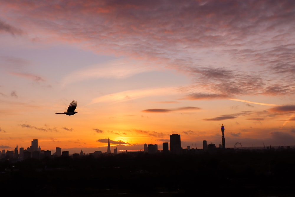silhouette of bird flying over city during sunset