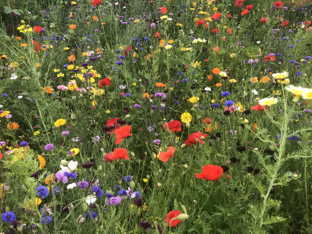 red and purple flower field during daytime