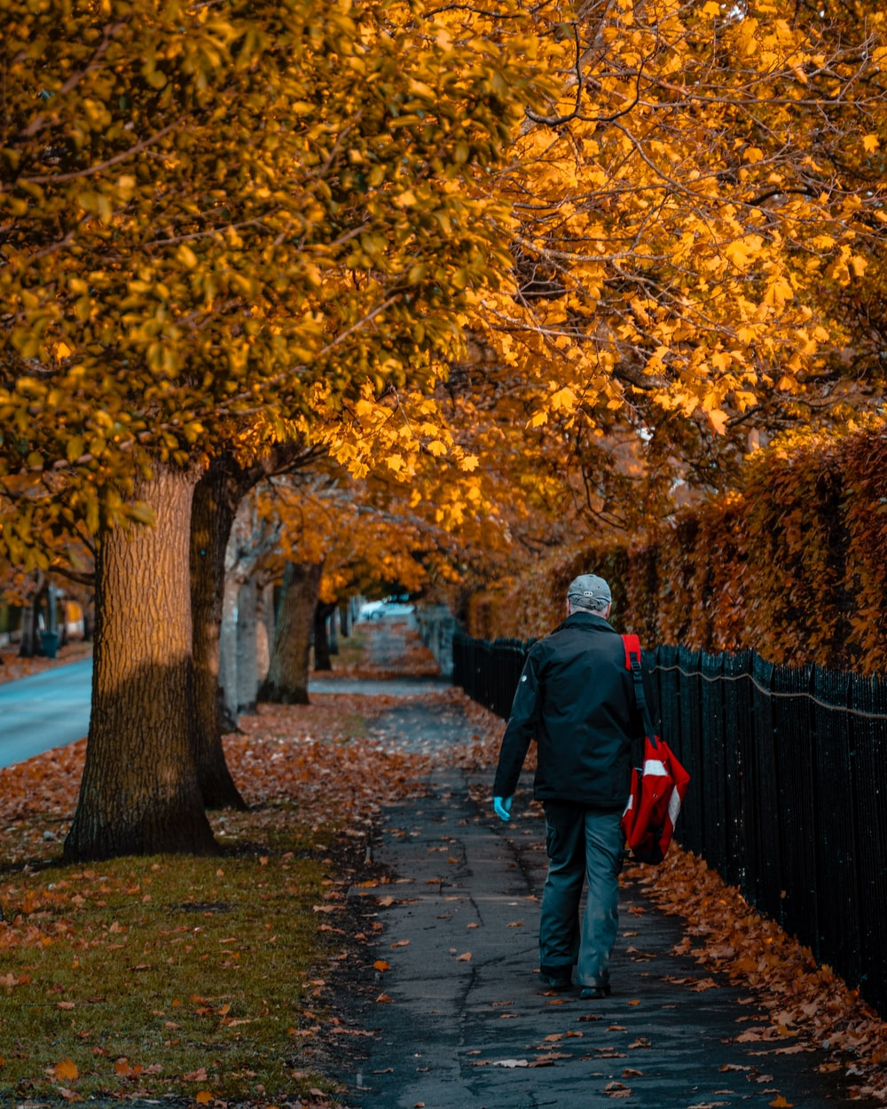 man in black jacket and red backpack walking on pathway between trees during daytime