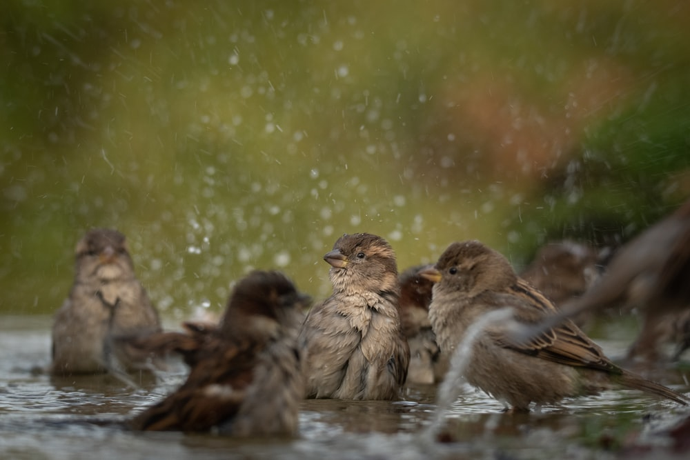 brown birds on body of water during daytime