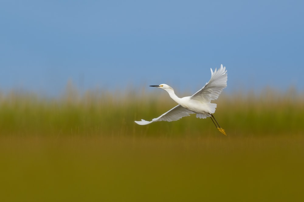 white bird flying over the lake during daytime