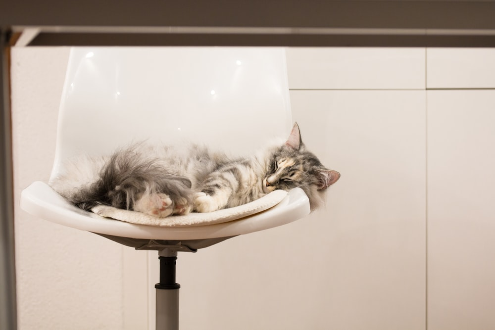 brown tabby cat on white and black cat bed