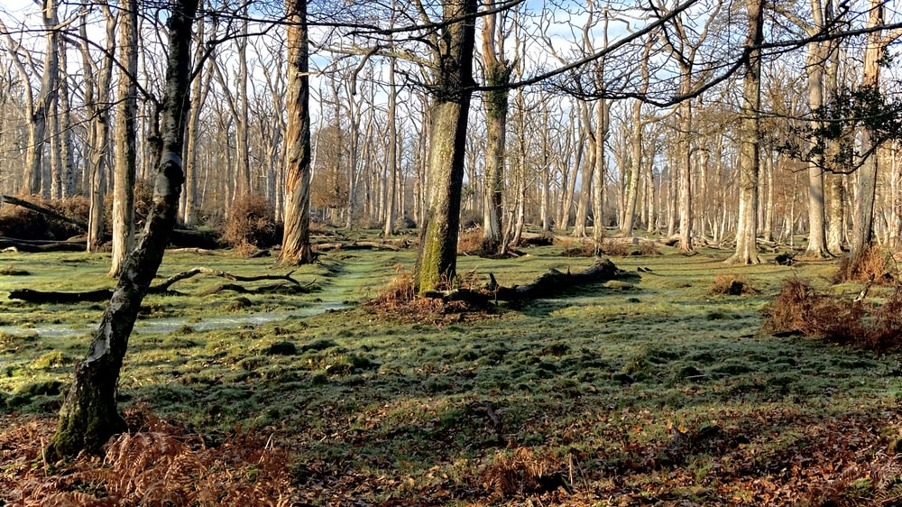brown leafless trees on green grass field during daytime