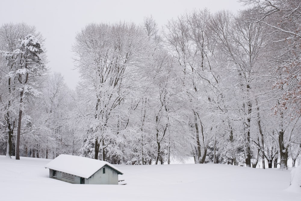 white wooden house surrounded by snow covered trees