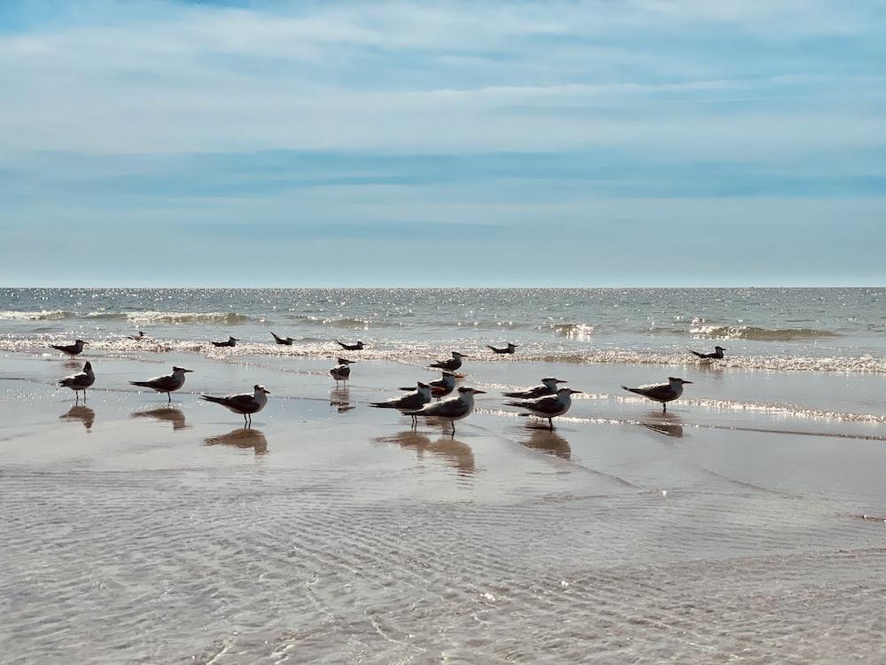 flock of birds on beach during daytime