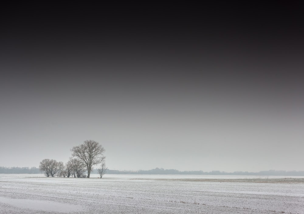 leafless tree on snow covered field
