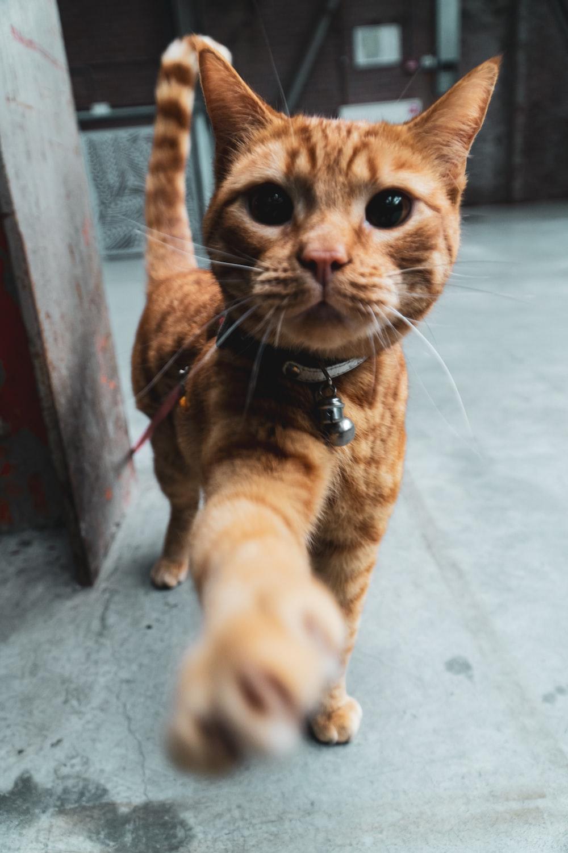 orange tabby cat on white floor