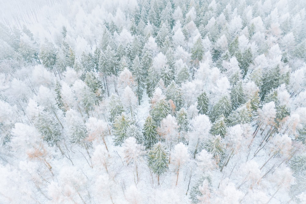 white and green pine tree covered with snow