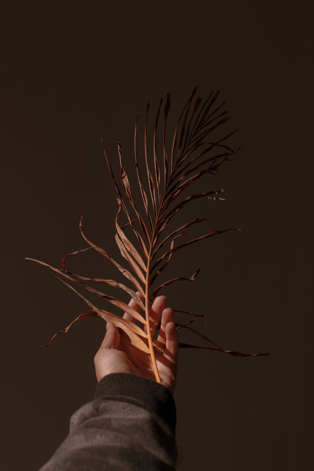 person holding brown plant in black background