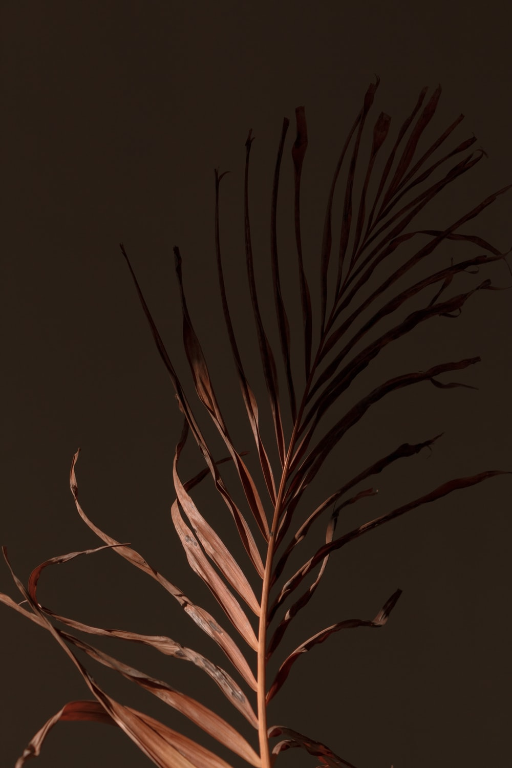 brown plant in black background