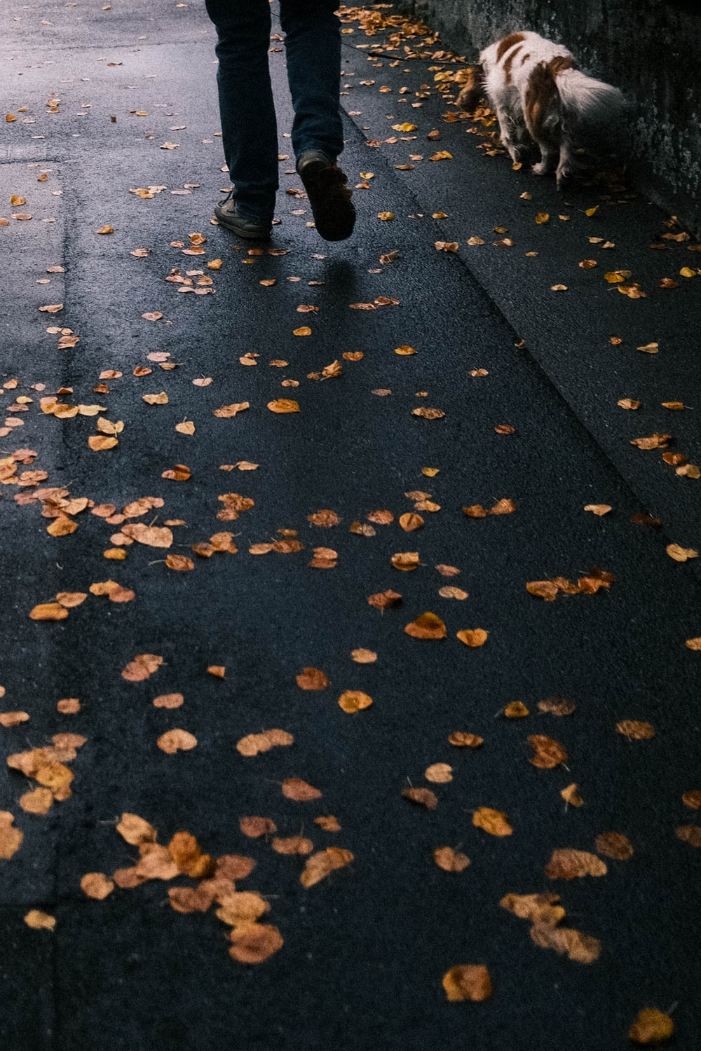 person in black pants walking on gray concrete road with yellow leaves