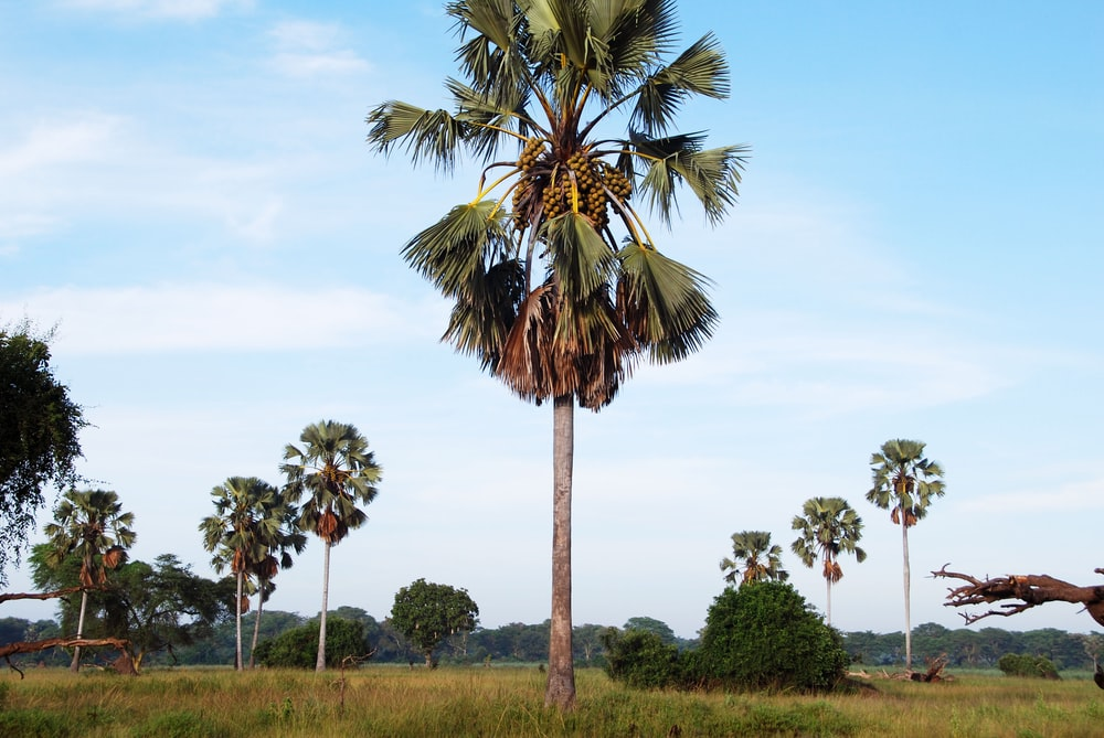 green palm tree on green grass field during daytime