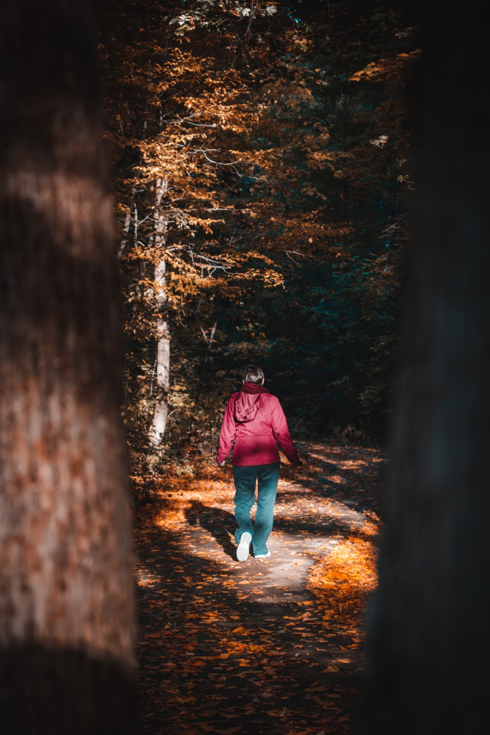 woman in red jacket and blue denim jeans walking on forest during daytime