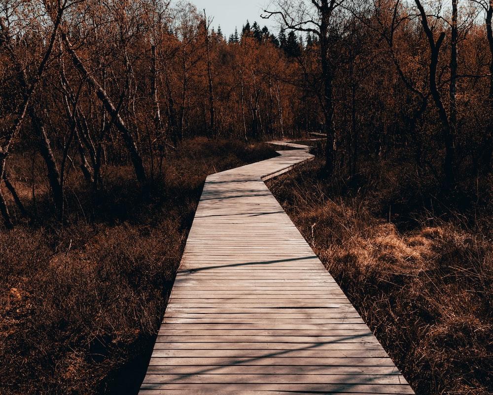 brown wooden pathway between brown trees during daytime