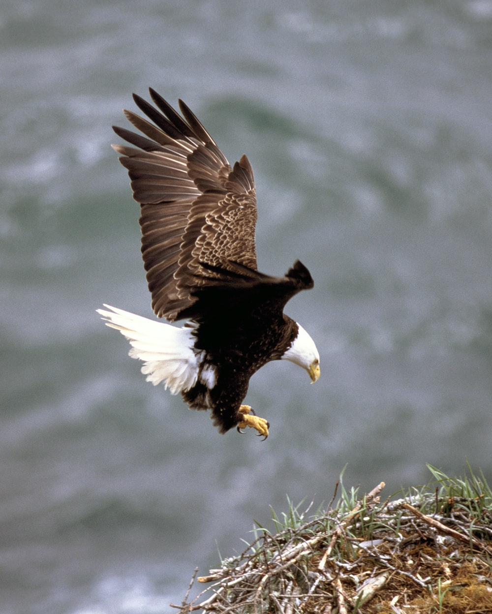 brown and white eagle flying over body of water during daytime