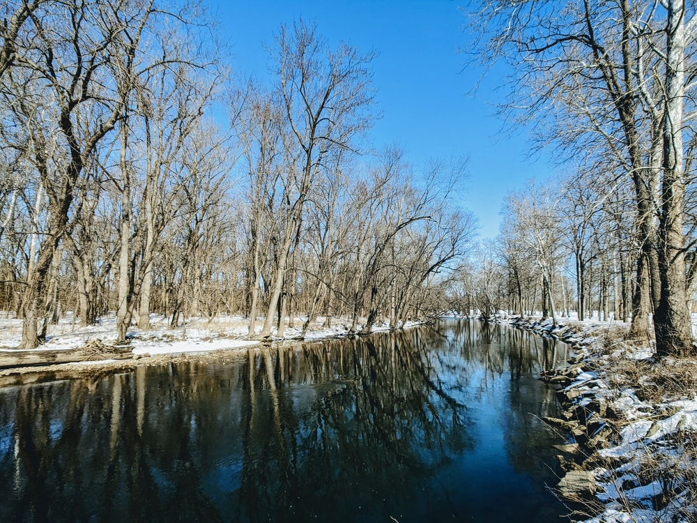 leafless trees near body of water during daytime
