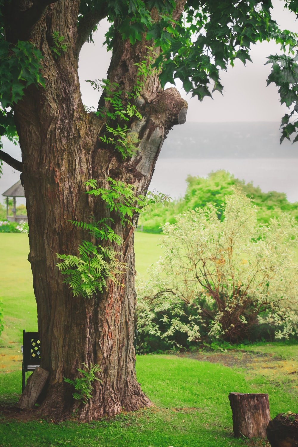 brown tree trunk on green grass field during daytime
