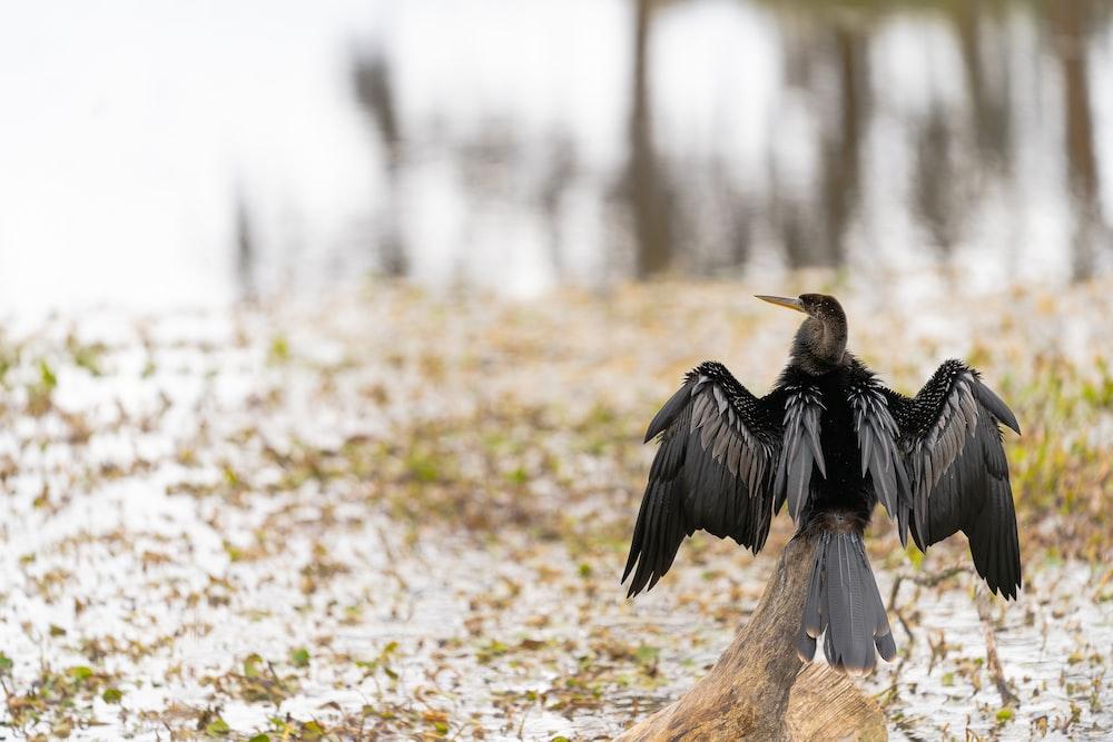 black and brown bird on brown rock during daytime