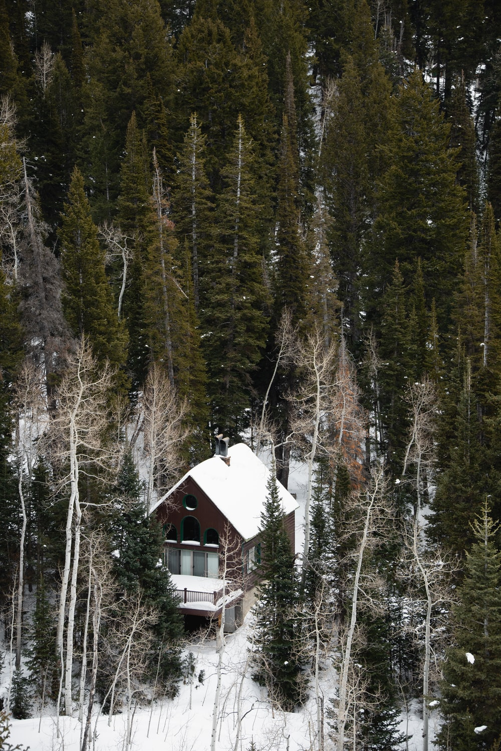 white and brown wooden house in the middle of forest